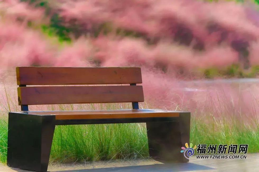 """浪漫到爆!福州大片""""粉色花海""""再现!错过要等一年!"""