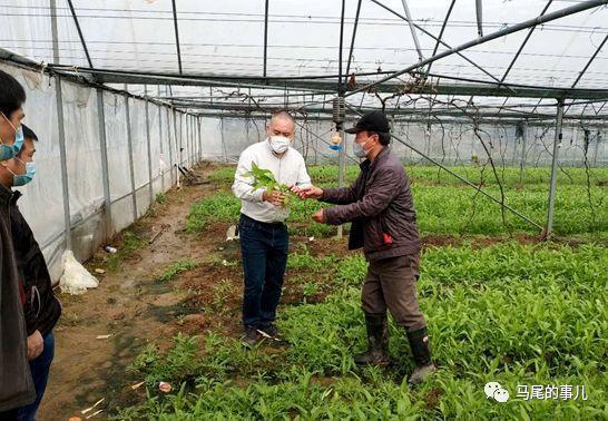 """稳定""""菜篮子"""",马尾区多措并举促进粮食生产"""
