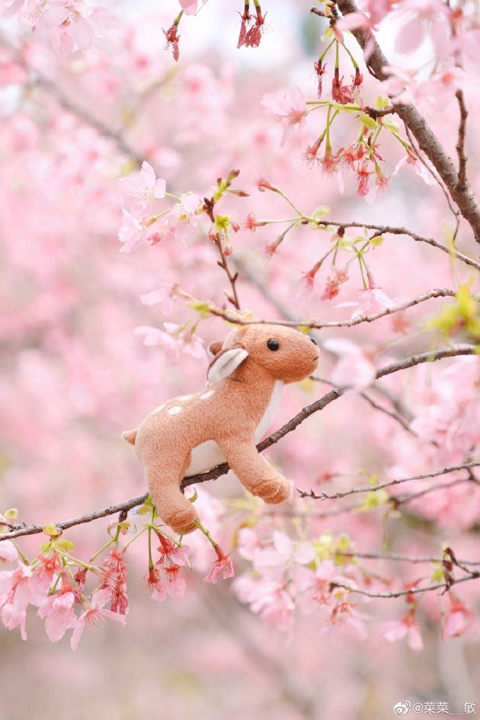 美炸了!福州这片粉色世界你能抗拒吗?