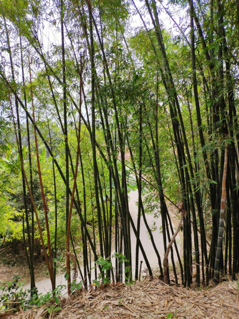 在福州,尝一口春天的味道①:雨后春笋