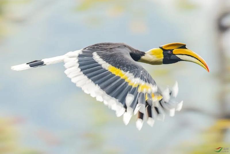 福州海关破获一起重大走私珍贵野生动物案