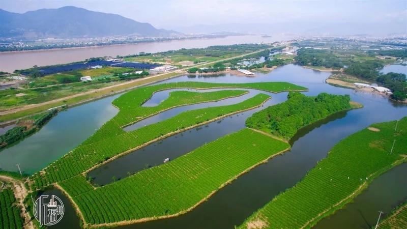 听福州|茶情留榕城——一座茶香四溢的城市